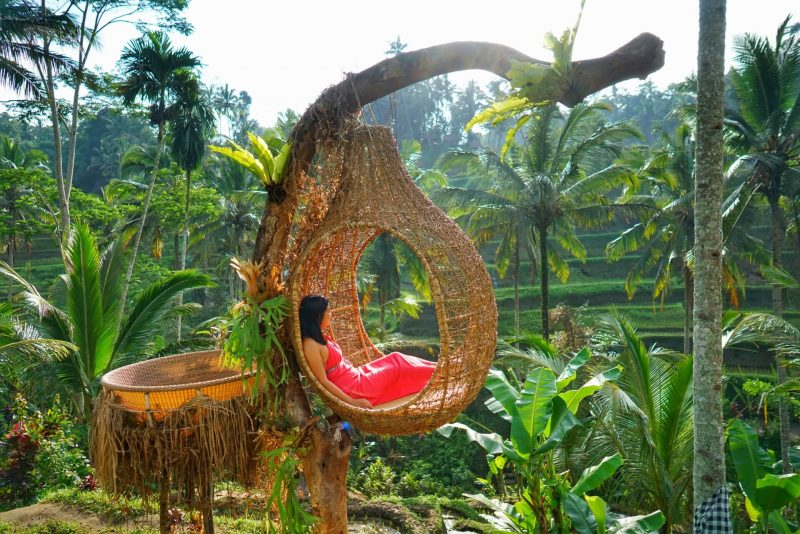 Bali nest overlooking rice terrace