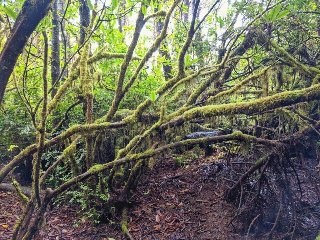Hobbit Trail, Oregon Coast