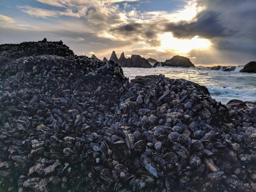 Mussel-covered rocks at Seal Rock, Oregon